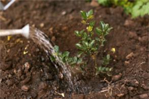 tuinman eindhoven